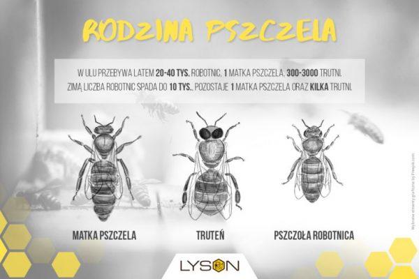 rodzina-pszczela